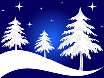 Christmas trees. Snow covered christmas tree in the night -VECTOR Royalty Free Stock Images