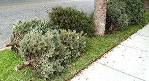 Christmas trees abandoned as trash on the sidewalk. Christmas is over and so is the life of a Christmas tree tossed to the curb for the recycler truck to come Stock Images