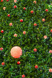 Christmas trees and balls Royalty Free Stock Images