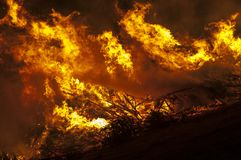 Christmas trees burn in the open air stock photo