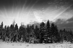 Christmas trees and cloudscape Royalty Free Stock Image