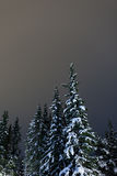 Christmas trees covered in snow. A high resolution image of Christmas evergreen trees in snow Stock Images
