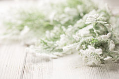 Christmas trees. Royalty Free Stock Photography