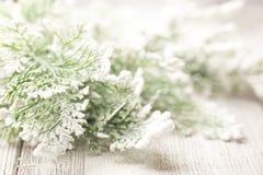 Christmas trees. Stock Photography