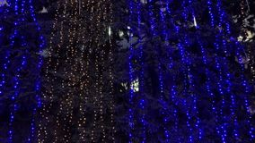 Christmas trees in electric garlands, Night. Scene stock video
