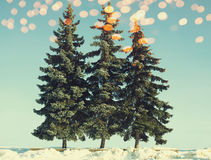 Christmas trees with golden bokeh in winter, vintage colors photo Royalty Free Stock Image