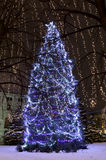 Christmas Trees Illuminated at Rice Park Royalty Free Stock Photo