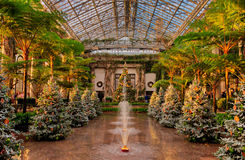 Christmas trees inside the Conservatory at Longwood Gardens, Pen royalty free stock photo