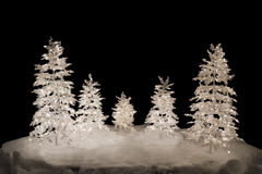 Christmas Trees, isolated. 5 isolated christmas trees with lights on snow basement. Isolation color - black Stock Photos