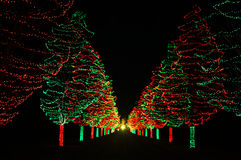 Christmas Trees Leading The Way Stock Images