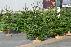 Christmas trees for sale Stock Photo