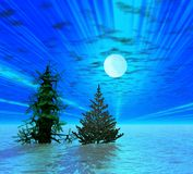 Christmas trees. Moonlight. Two Christmas trees in moonlight Royalty Free Stock Image