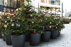 Christmas trees multicolored balls Stock Photography