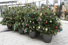 Christmas trees multicolored balls Royalty Free Stock Image