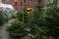 CHRISTMAS TREES SALE Stock Photos