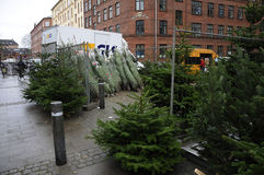 CHRISTMAS TREES SALE Royalty Free Stock Images