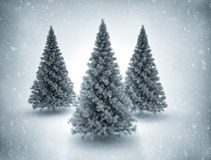 Christmas trees and snow. Three Christmas trees and snow background. High resolution Royalty Free Stock Images