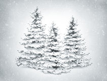 Christmas trees and snow Royalty Free Stock Photos