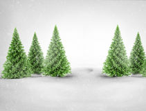 Christmas trees in snowy landscape Royalty Free Stock Photo