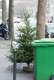 Christmas trees dumped and discarded on the streets of Paris, bu royalty free stock images