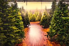Christmas trees store background sale yellow warm tone backlight gleam sunbeam shopping.  stock images