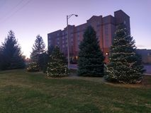 Christmas trees at sunset in West Lafayette Indiana royalty free stock image