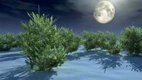 Christmas trees under moonlight Stock Images