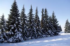 Christmas trees under the snow, Photo of winter landscape. Royalty Free Stock Photography