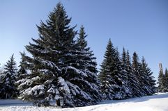 Christmas trees under the snow, Photo of winter landscape. Royalty Free Stock Photos
