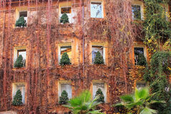 Christmas trees in the windows of house in Rome Stock Photos