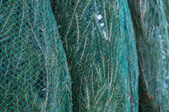 Christmas trees wrapped in netting are on the market for sale