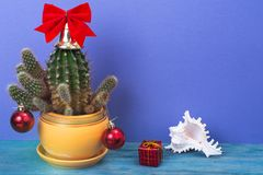 Christmas in tropical climate concept. Cactus as festive tree on bright pastel background with space for text Stock Photo