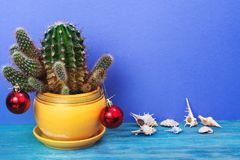 Christmas in tropical climate concept. Cactus as festive tree on bright pastel background with space for text Royalty Free Stock Photo