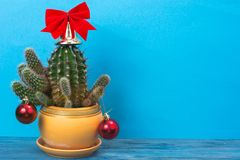 Christmas in tropical climate concept. Cactus as festive tree on bright pastel background with space for text Royalty Free Stock Images