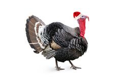 Christmas turkey Stock Photo