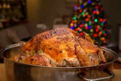 Christmas turkey in a roasting pan with a decorated christmas tree in the background. royalty free stock image