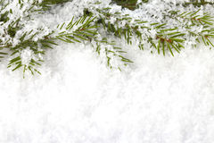 Christmas twig royalty free stock images