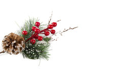 Christmas twig and berries. On a white background Stock Image