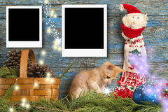 Christmas two instant empty photo frames. Funny playful kitten on primitive wooden background Stock Photo