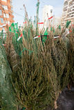 Christmas urban fir-tree market Stock Photography