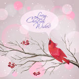 Christmas Vector Snowy Rowan Berries Bird Card Royalty Free Stock Photo