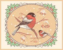 Christmas vintage card with bullfinches and snow Stock Images