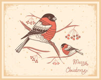 Christmas vintage card with bullfinches and snow Royalty Free Stock Image