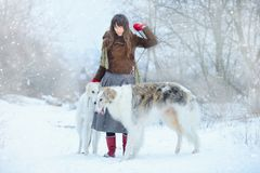 Christmas walk. Beautiful surprised woman in winter clothes with greyhound dogs graceful winter background with snow, emotions. po Stock Photography