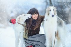 Christmas walk. Beautiful surprised woman in winter clothes with greyhound dogs graceful winter background with snow, emotions. po Royalty Free Stock Image
