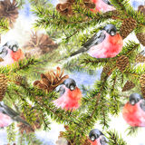 Christmas Watercolor Seamless Background. With Sprig of Fir Trees and bullfinch, watercolor illustration Royalty Free Stock Photography