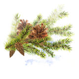 Christmas Watercolor with Sprig of Fir Trees. Christmas Watercolor New Year card with Sprig of Fir Trees and Pine cones, watercolor illustration Royalty Free Stock Image