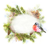 Christmas Watercolor with Sprig of Fir Trees Stock Photos