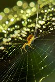 Christmas web. Spider and web, with thousands of backlit dewdrops, like a christmas tree Royalty Free Stock Images