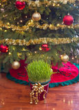Christmas wheat under xmas tree Royalty Free Stock Photography